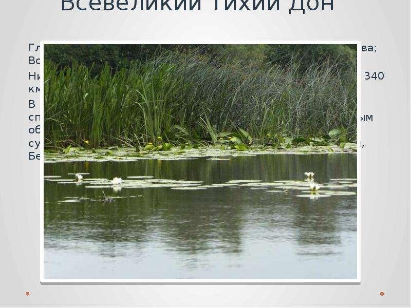 Всевеликий тихий Дон Главнейшие притоки: Непрядва, Красивая Меча, - справа; Воронеж – слева. Ниже г.