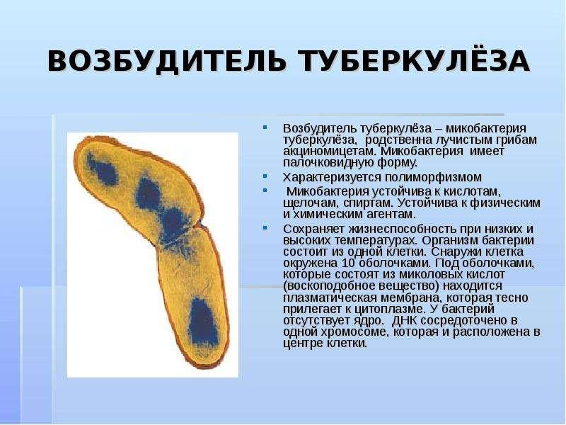 mycobacterium tuberculosis