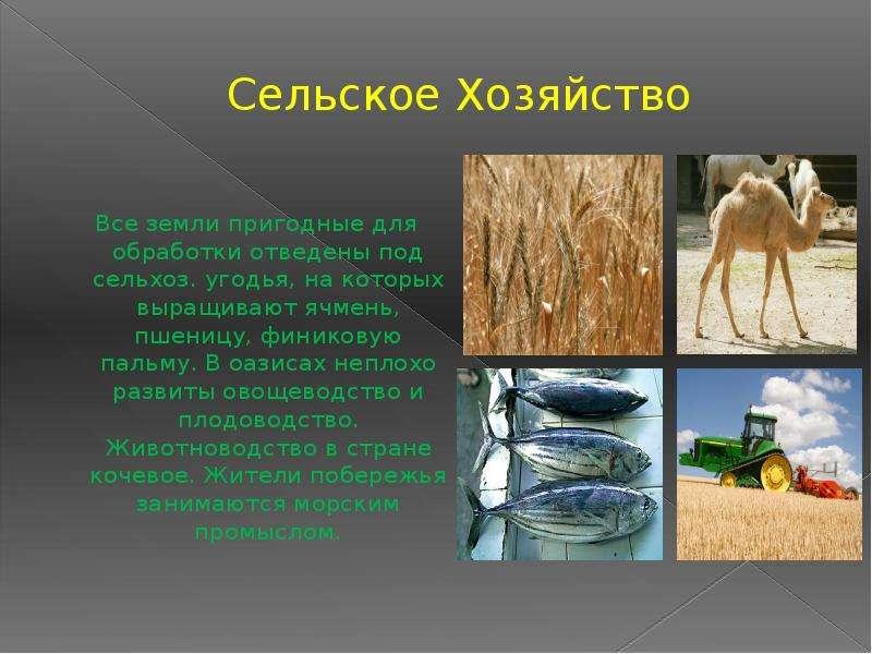 Сельское Хозяйство Все земли пригодные для обработки отведены под сельхоз. угодья, на которых выращи