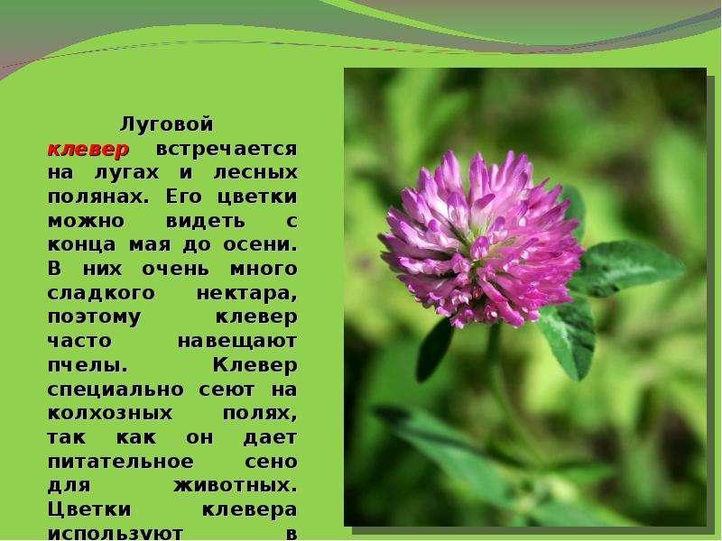Цветы и описание их и