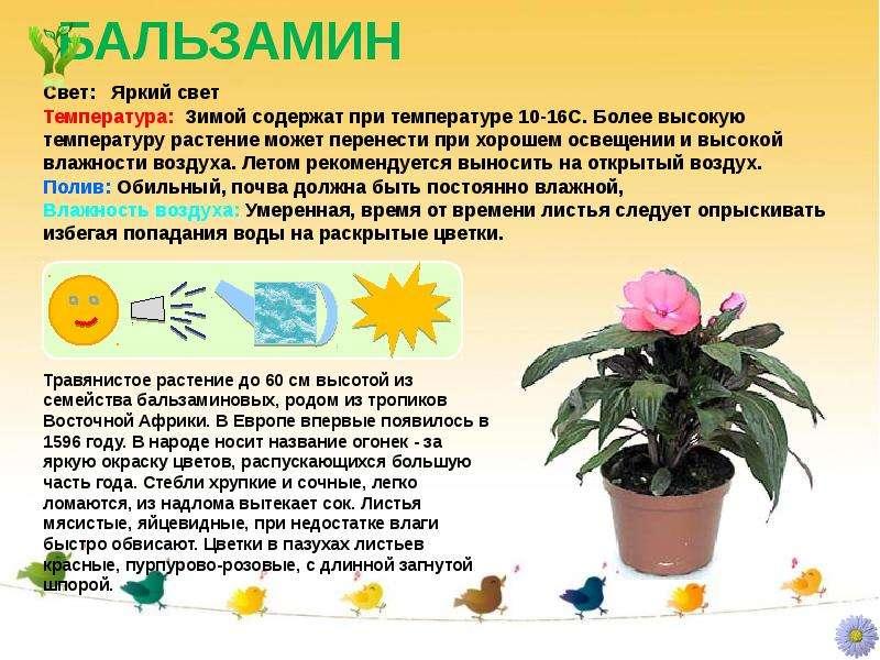 Уход за комнатными растениями и название цветка