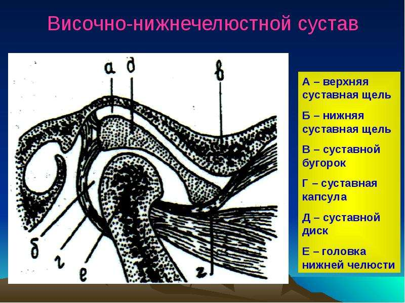 челюстной сустав название