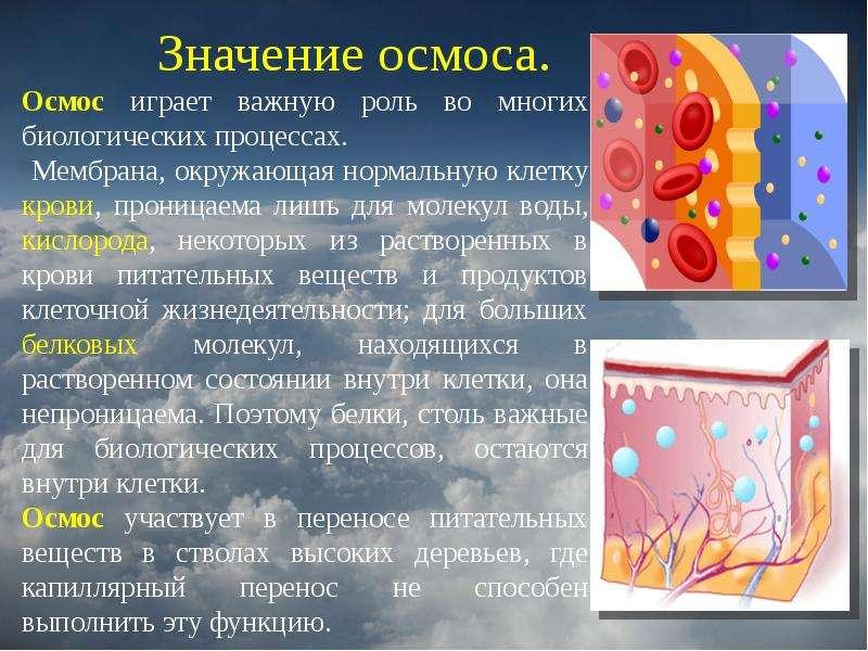 http://mypresentation.ru/documents/a9a03552eda8a3f7912d9f02ff35e42d/img13.jpg