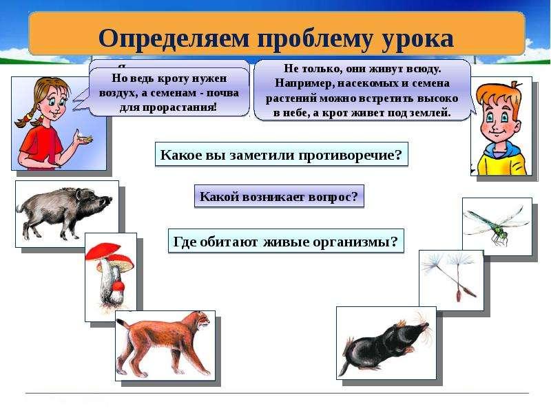 Где обитают живые организмы, слайд 3