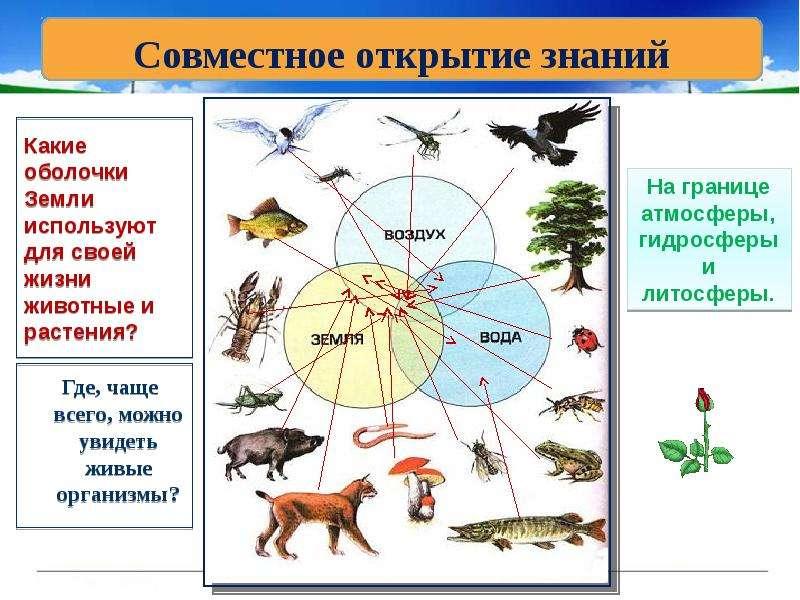 какие живые организмы разместились на земле