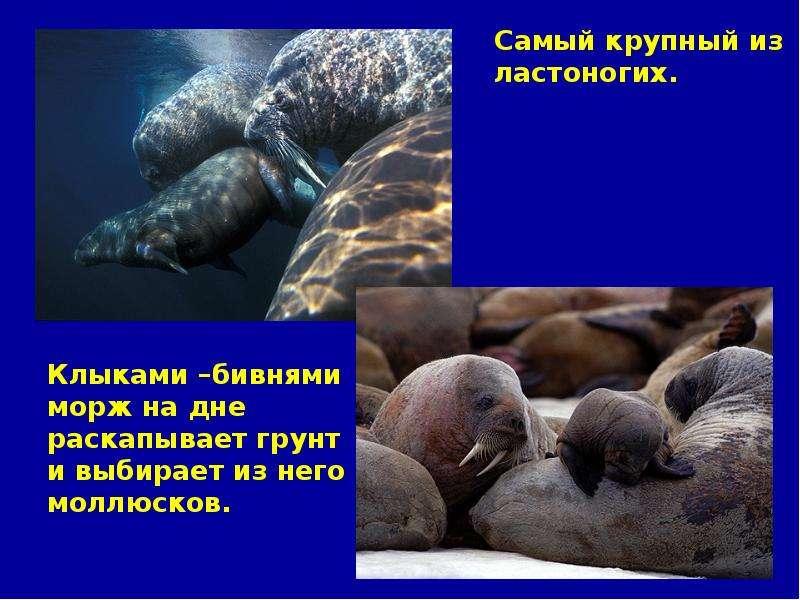Сообщение о животном обитателей океана