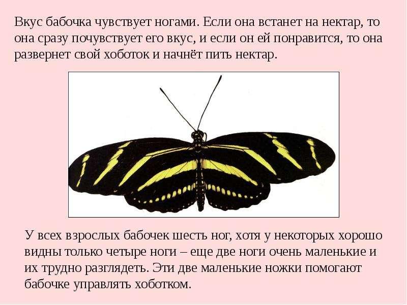 презентация на тему бабочки проходит