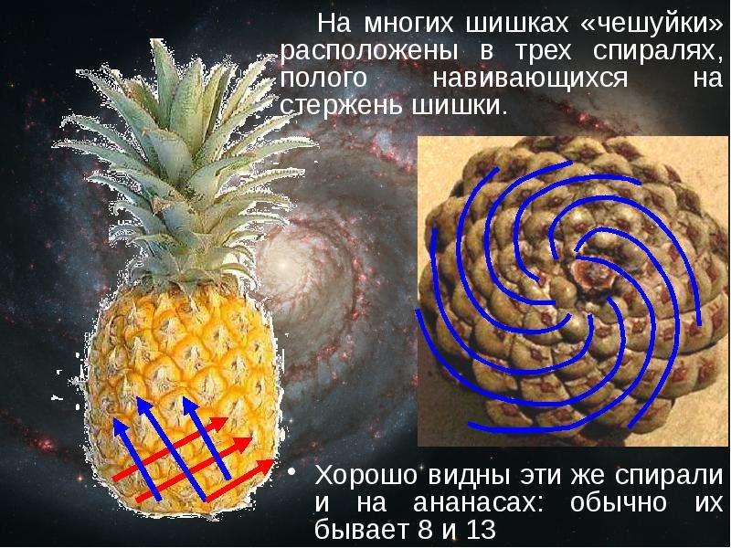 какой размер чешуек у реального ананаса