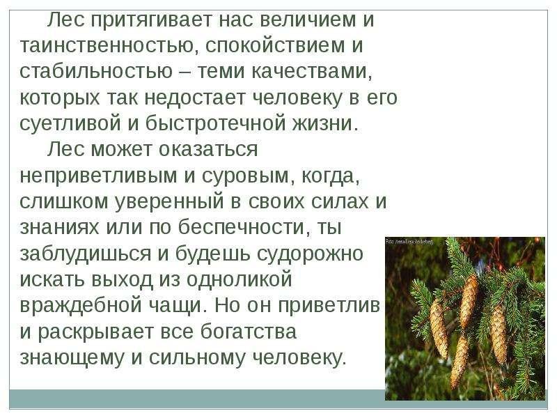 Леса России ДАВНО ПОРА БЫ ВОЗДАТЬ ЕМУ ХВАЛУ, КАКОЙ ЗАСЛУЖИВАЕТ ЭТОТ МИЛЫЙ ДЕД, СТАРИННЫЙ ПРИЯТЕЛЬ НАШЕГО ДЕТСТВА, НАСМЕРТЬ СТОЯВ, слайд 17