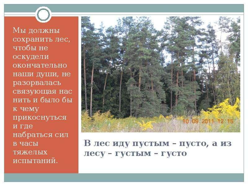 В лес иду пустым – пусто, а из лесу – густым – густо Мы должны сохранить лес, чтобы не оскудели окон