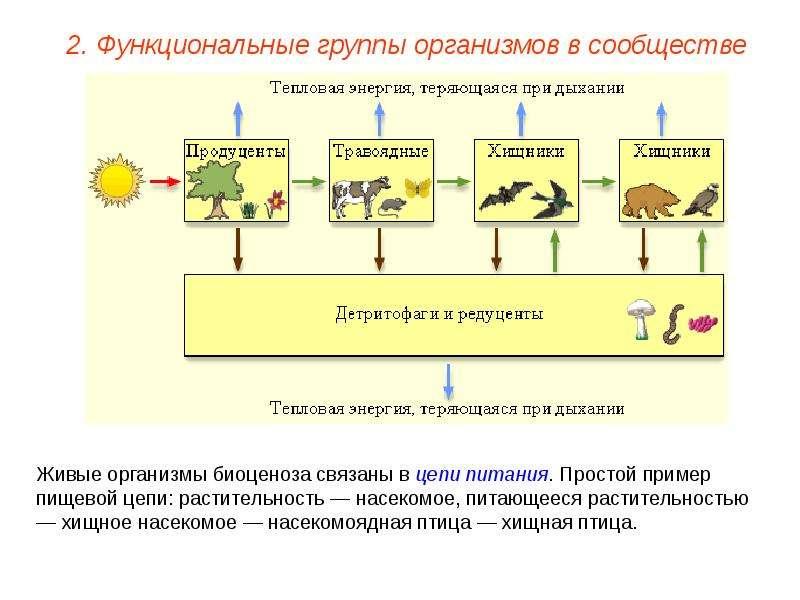 натуральная косметика природная косметика состав натуральной  реферат февральская революция в россии Реферат экологическое питание и эк