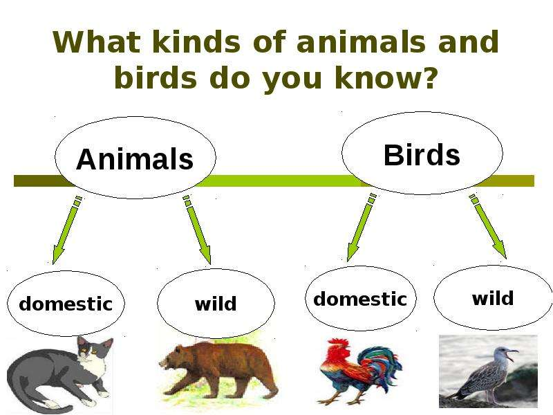essay on love for animals and birds Birds english essay- short essay on birds for kids subject write an 10 years birds are some of the most amazing animals on i love this website i always.