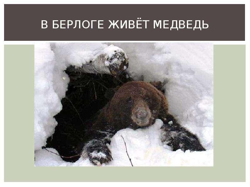 каждый картинка где живет медведь применялись только при