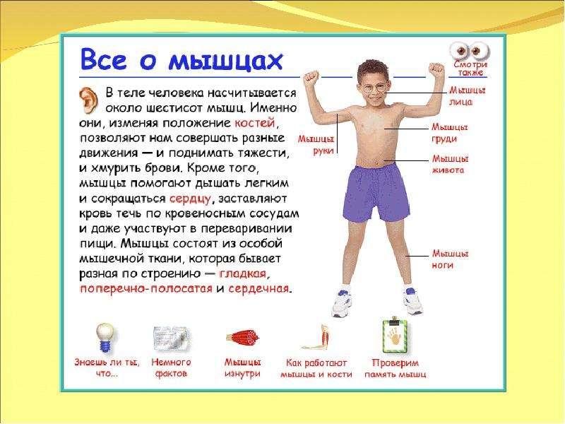 знакомство с частями тела для детей