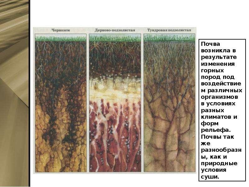 Болезни почвы в картинках