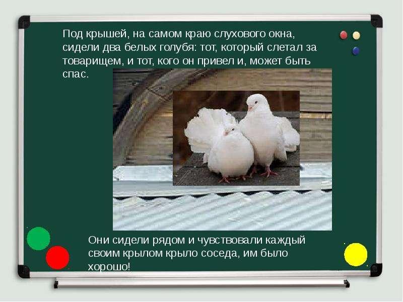 О чем проза голуби