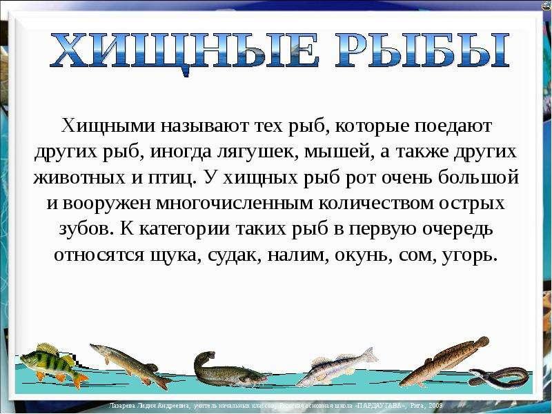текст про рыбалку на английском языке