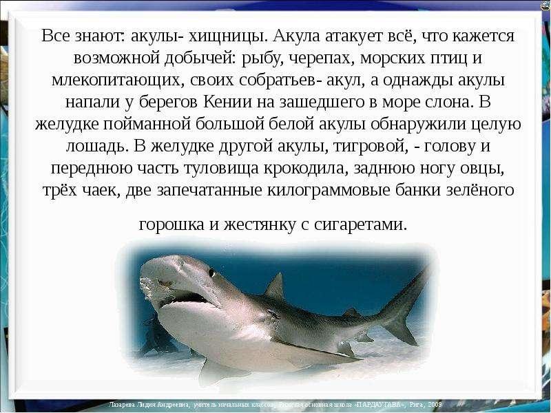 Акулы презентация скачать