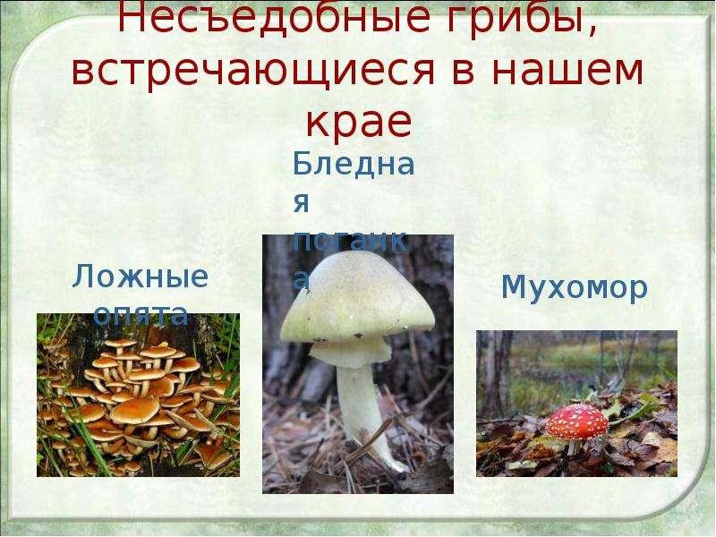 Несъедобные грибы, встречающиеся в нашем крае