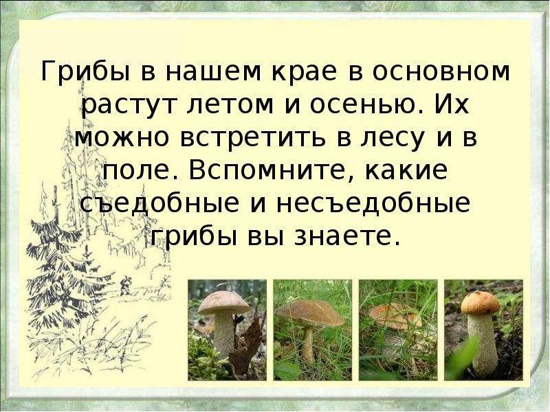 Грибы в нашем крае в основном растут летом и осенью. Их можно встретить в лесу и в поле. Вспомните,