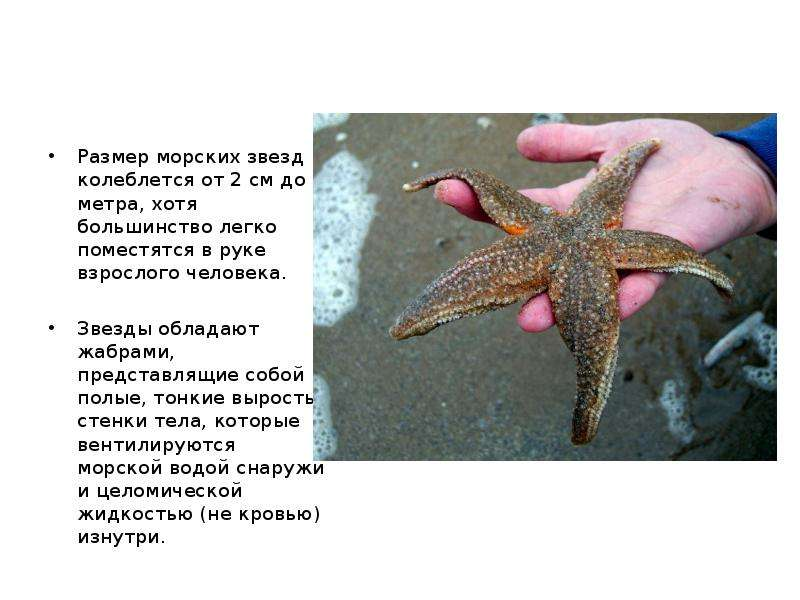 Реферат на тему морская звезда 2611
