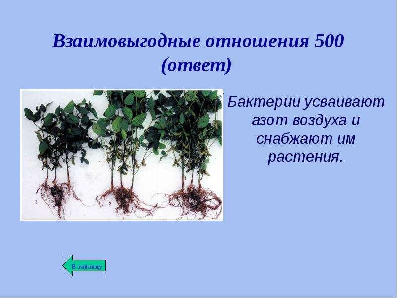 Взаимоотношения растений в природе