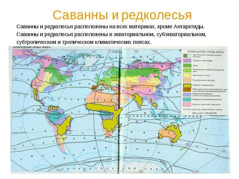Саванны и редколесья Саванны и редколесья расположены на всех материках, кроме Антарктиды. Саванны и