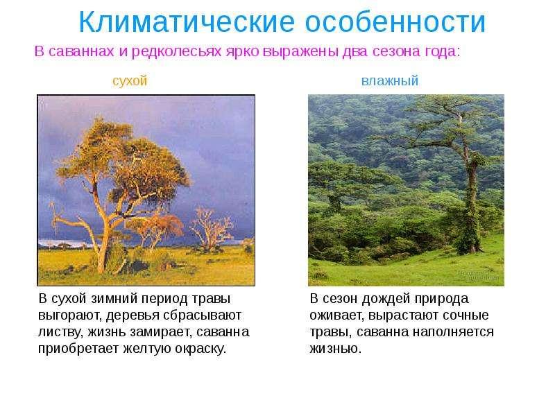 Климатические особенности В саваннах и редколесьях ярко выражены два сезона года: