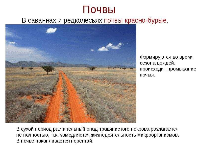 Почвы В саваннах и редколесьях почвы красно-бурые.