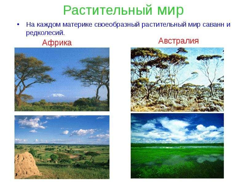 Растительный мир На каждом материке своеобразный растительный мир саванн и редколесий.