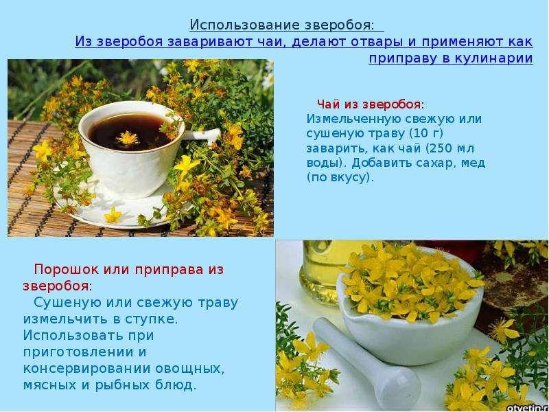 Что заваривать зверобой чай