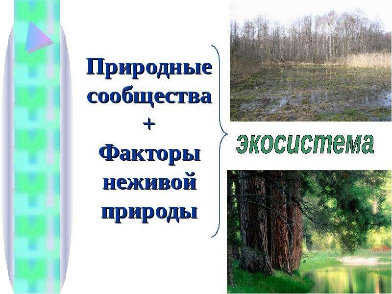 Природные сообщества + Факторы неживой природы