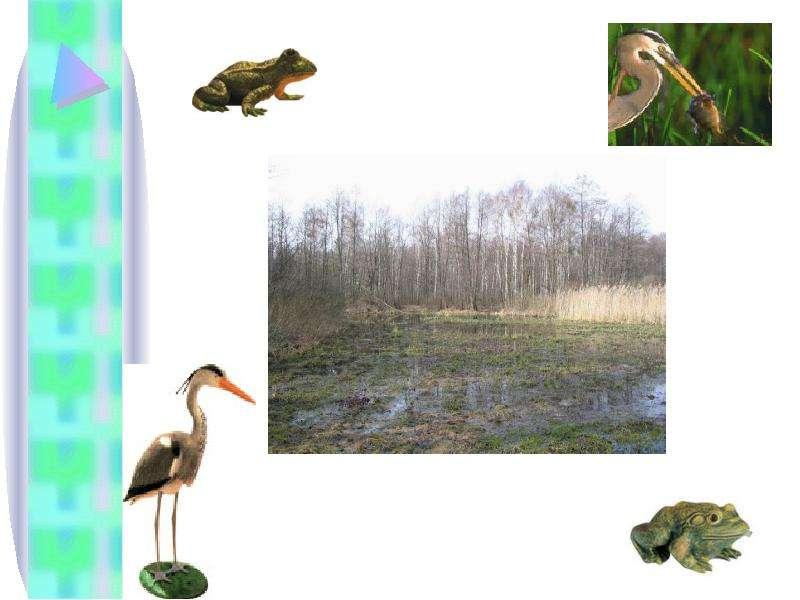 Тема урока: Природное сообщество. Экосистема. Цель: Сформировать понятие о природном сообществе и экосистеме Выяснить причины,, слайд 5