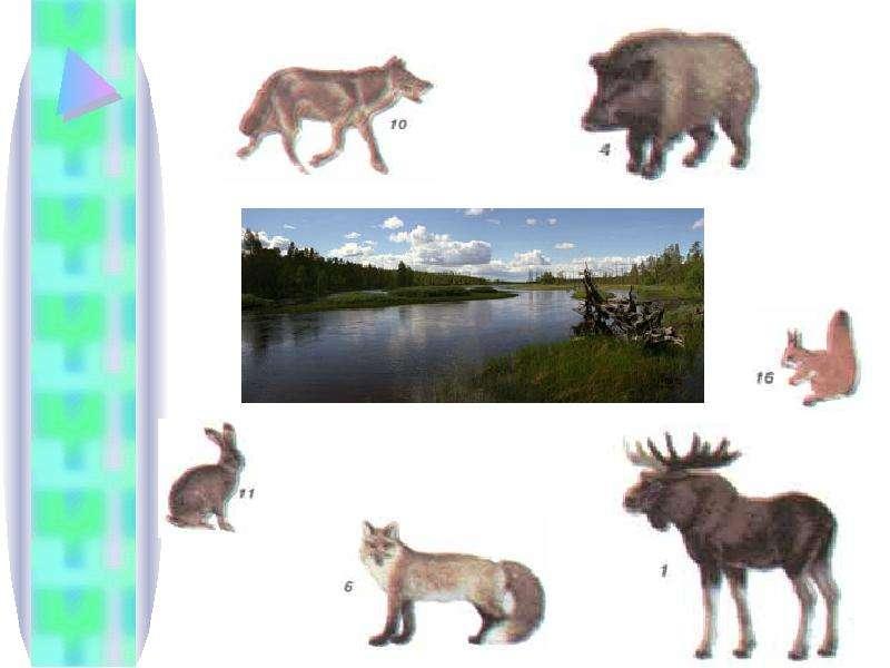 Тема урока: Природное сообщество. Экосистема. Цель: Сформировать понятие о природном сообществе и экосистеме Выяснить причины,, слайд 6