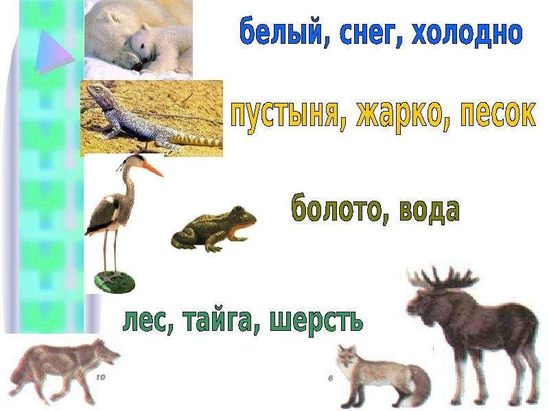 Тема урока: Природное сообщество. Экосистема. Цель: Сформировать понятие о природном сообществе и экосистеме Выяснить причины,, слайд 7