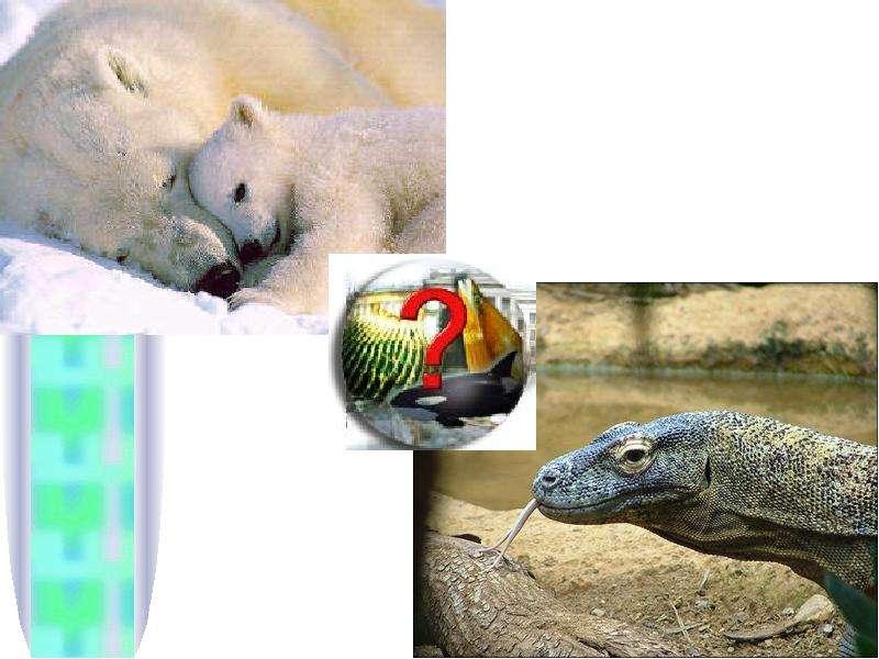 Тема урока: Природное сообщество. Экосистема. Цель: Сформировать понятие о природном сообществе и экосистеме Выяснить причины,, слайд 9
