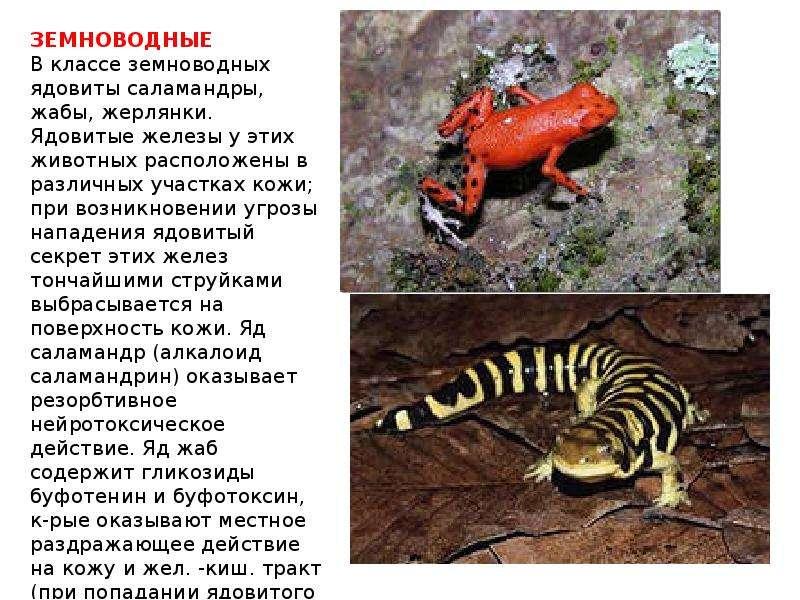 Какие ядовитые животные обитают в россии затем