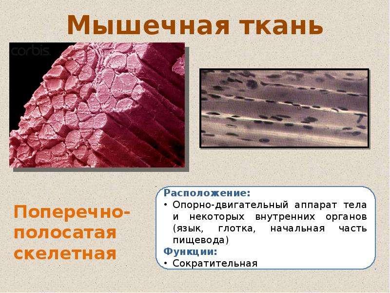 нескольких картинки на тему ткани человека деле оказывается, что