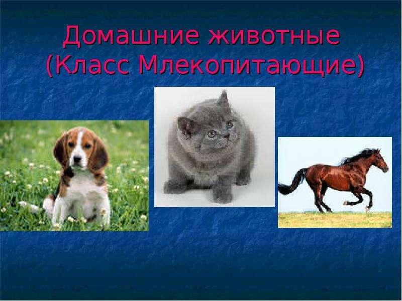 Презентация Домашние животные (Класс Млекопитающие)