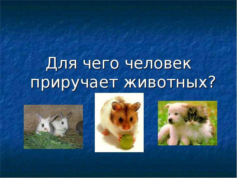 Для чего человек приручает животных?