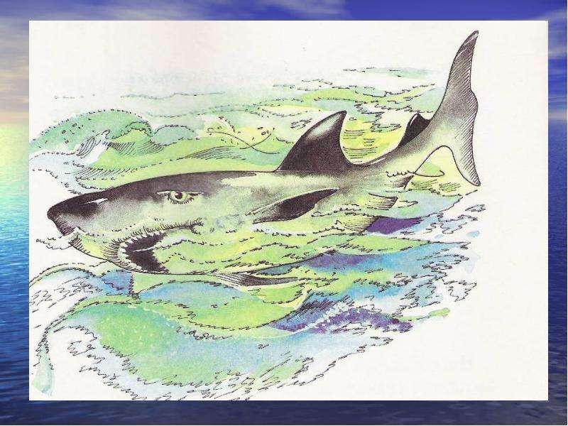 Рисунок лев николаевич толстой акула