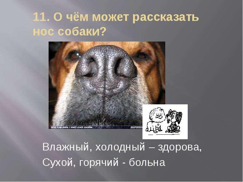 Почему у собак мокрый и холодный нос