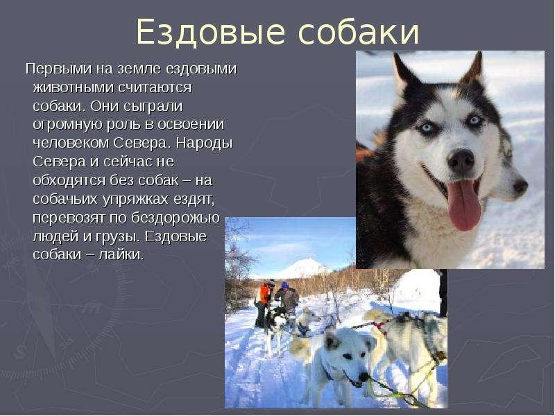 Презентации Проект Про Собак