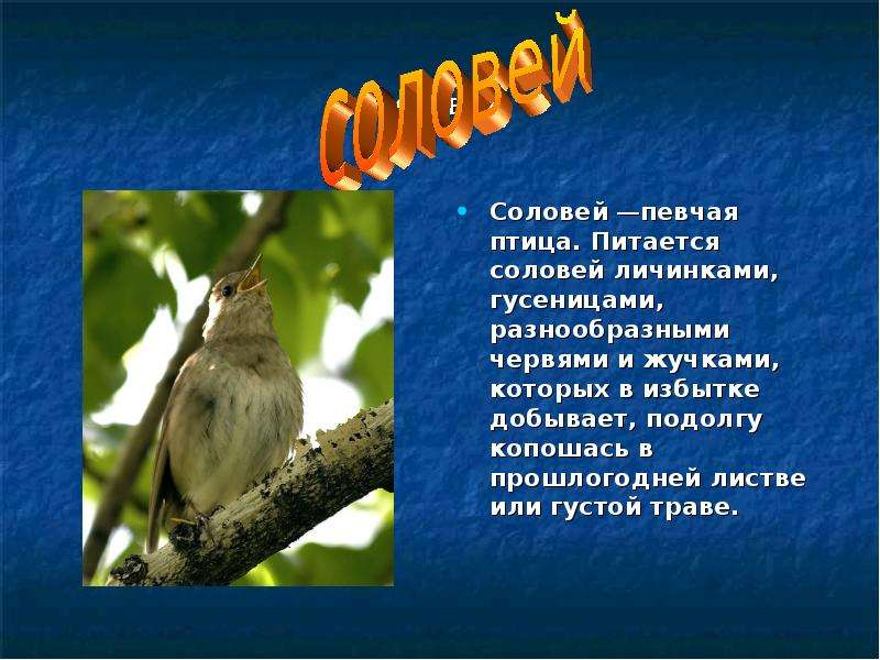 essay on nightingale bird Birds english essay- short essay on birds for kids subject write an english essay on birds in your words the cuckoo and the nightingale are singing birds.