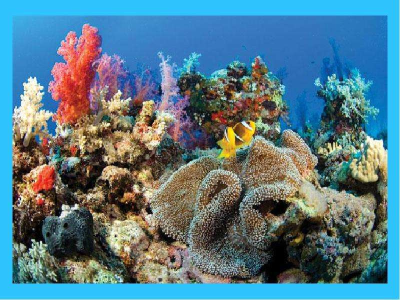 the destruction of coral reefs the largest biological structures on earth and the need to protect th The environmental impact of coral mining on coral reefs in the and associated coral structures the need to conserve and protect existing reefs from further.