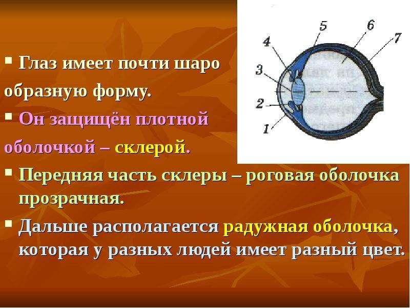 Коррекция зрения очками и контактным линзами