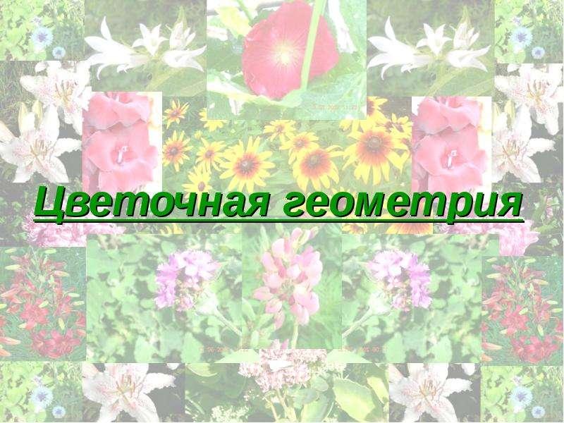 Цветочная геометрия
