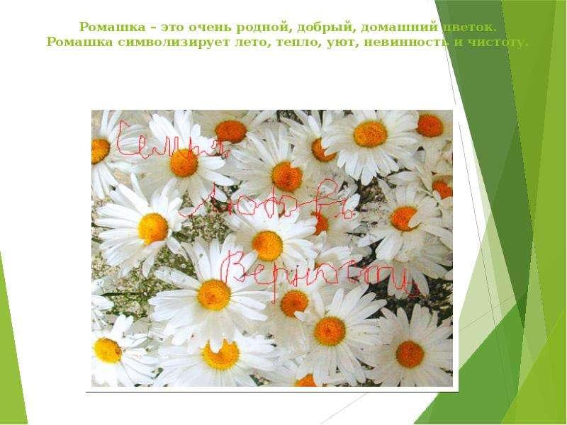 Ромашка цветок символ