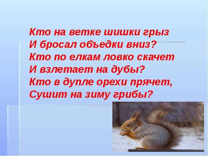 стихи белочка зимой смерти военачальника