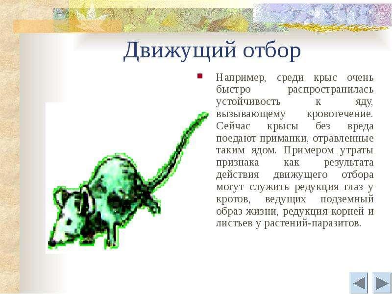 Движущий отбор Например, среди крыс очень быстро распространилась устойчивость к яду, вызывающему кр
